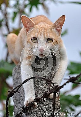 Free Cat Stock Photo - 15851770