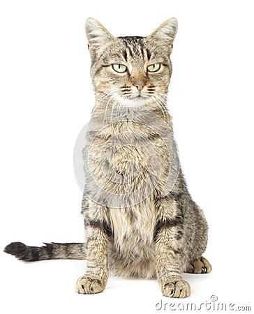Free Cat Stock Photography - 16796692