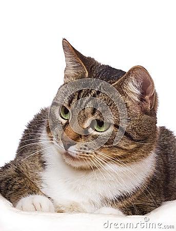 Free Cat Royalty Free Stock Photos - 17108218