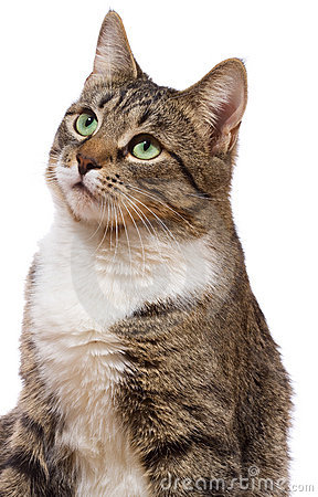 Free Cat Stock Image - 17108241