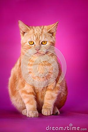 Free Cat Royalty Free Stock Photo - 4455115