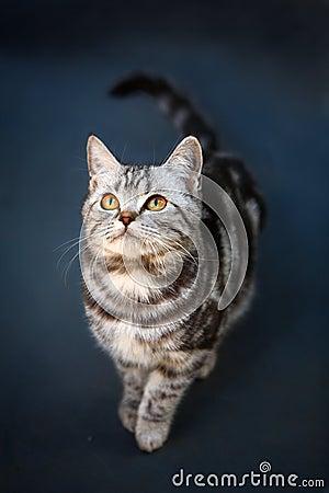 Free Cat Stock Photography - 4457072