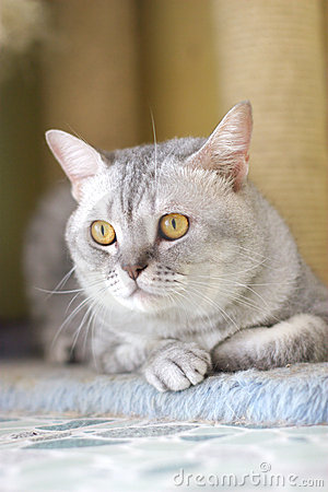 Free Cat Royalty Free Stock Photography - 6183027