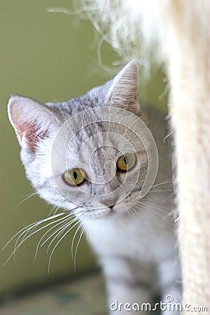 Free Cat Royalty Free Stock Photo - 6190905