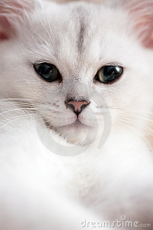Free Cat Royalty Free Stock Photography - 6718337
