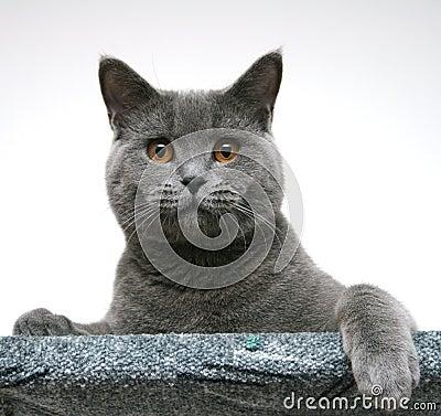 Free Cat Royalty Free Stock Photo - 678915