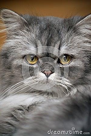 Free Cat Stock Image - 761001