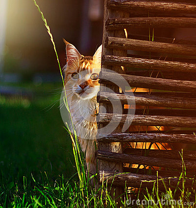 Free Cat Stock Photography - 82609432