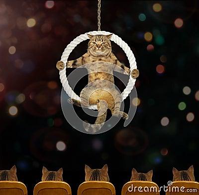 Free Cat Acrobat 4 Stock Photo - 122133950
