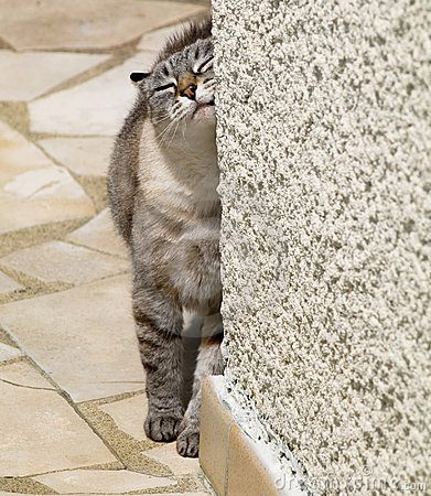 Free Cat Against Wall Stock Photo - 5409170