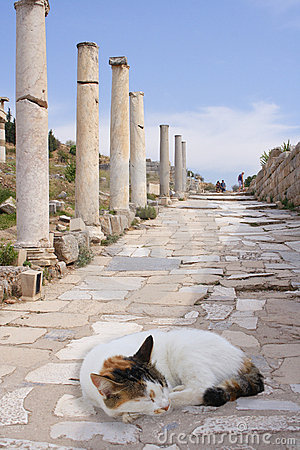 Cat on ancient colonade, Ephesus