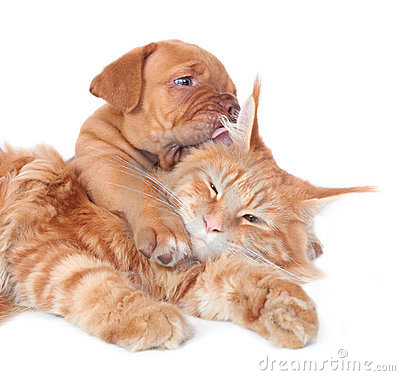 Free Cat And Dog Stock Image - 21648921