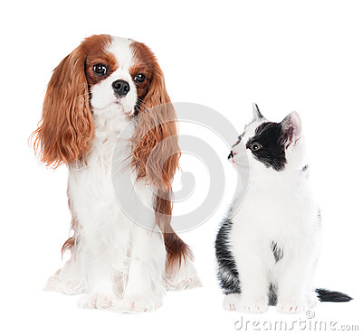 Free Cat And Dog Royalty Free Stock Photos - 35772828