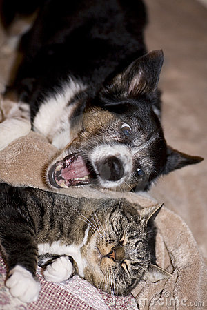 Free Cat And Dog Royalty Free Stock Photos - 4668378