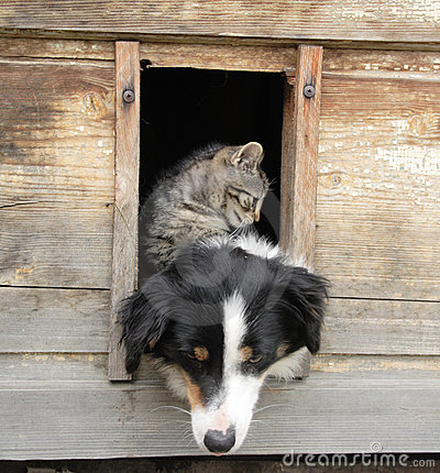 Free Cat And Dog At Home Stock Images - 12679314