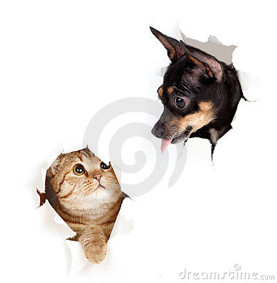 Free Cat And Dog In Paper Side Torn Hole Isolated Royalty Free Stock Image - 23941806