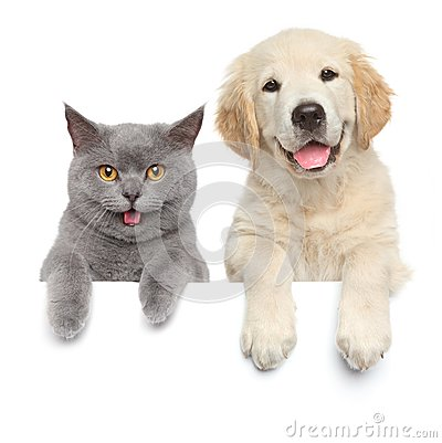 Free Cat And Dog Over White Banner Stock Image - 45215391