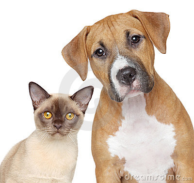 Free Cat And Dog Portrait On A White Background Stock Photo - 22979700