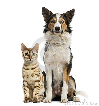 Free Cat And Dog Sitting Together Royalty Free Stock Photos - 39255738