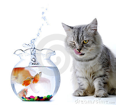Free Cat And Fish Royalty Free Stock Images - 1823979