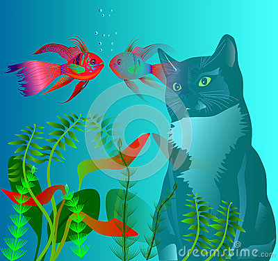 Free Cat And Fish Royalty Free Stock Photography - 77588337