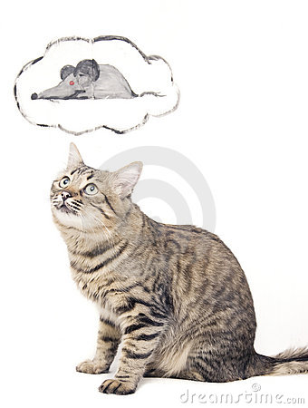 Free Cat And Mouse Stock Image - 19288571