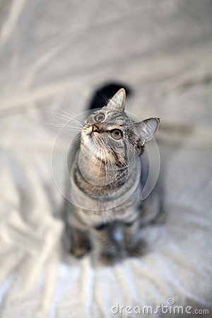Free Cat And The Camera Lens And Professional Wildlife Royalty Free Stock Photos - 45417648