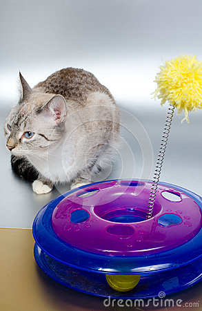 Free Cat And Toy Stock Images - 53691294