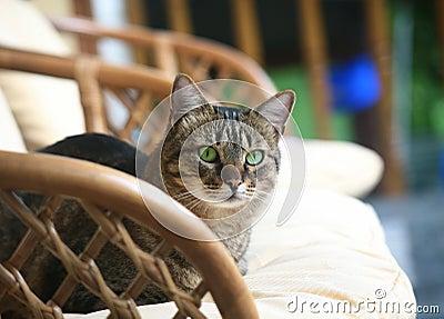 Cat in an armchair.