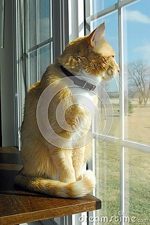 Free Cat At Window Royalty Free Stock Photo - 4604305