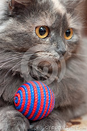 Cat with ball