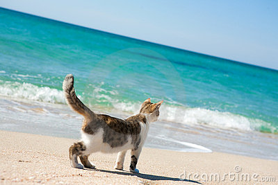 Cat on the beach