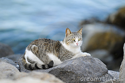 Cat in the beach