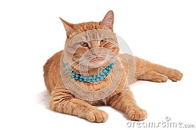 Cat in Beads