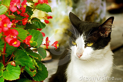 Cat Besides Flowers