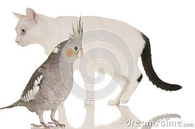 Cat and Bird Story