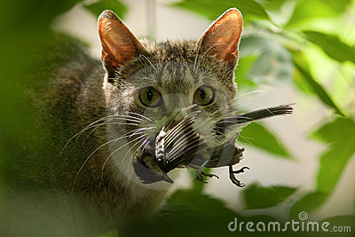 Cat with a bird in a teeth.