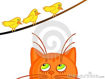 Cat and birdies