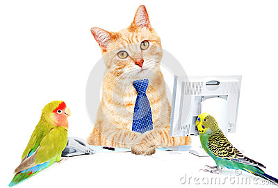 Cat and birds.