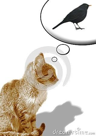 Free Cat & Black Bird Royalty Free Stock Photography - 4114387