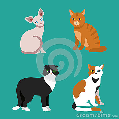 Cat breed cute pet portrait fluffy young adorable cartoon animal and pretty fun play feline sitting mammal domestic Vector Illustration