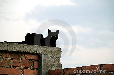 Cat on brick wall