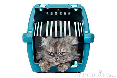 Cat in cage carrier