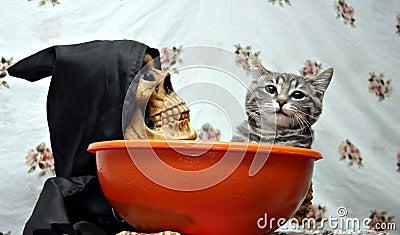 Cat in a candy dish