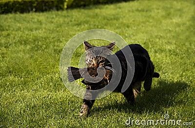 Cat Catches A Bird Stock Photos Image 10500083