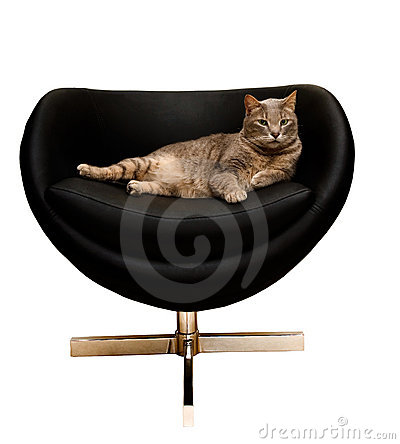 Cat in a chair