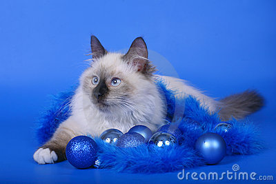 Cat with Christmas ornaments.
