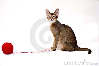 Cat with clew