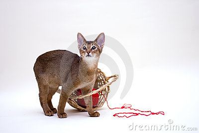 Cat with clew and basket