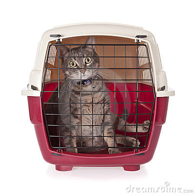 Cat closed inside pet carrier